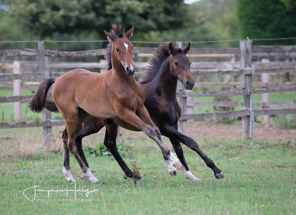 two yearling foals