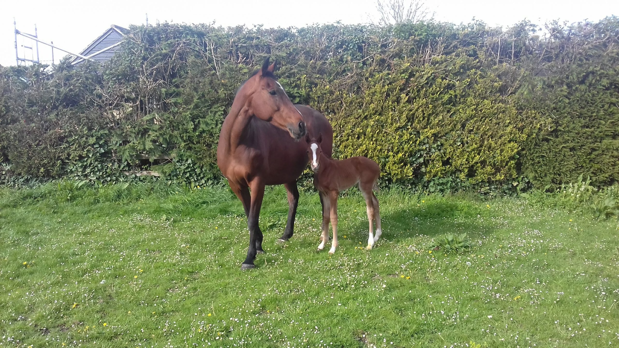 mare and foal in paddock