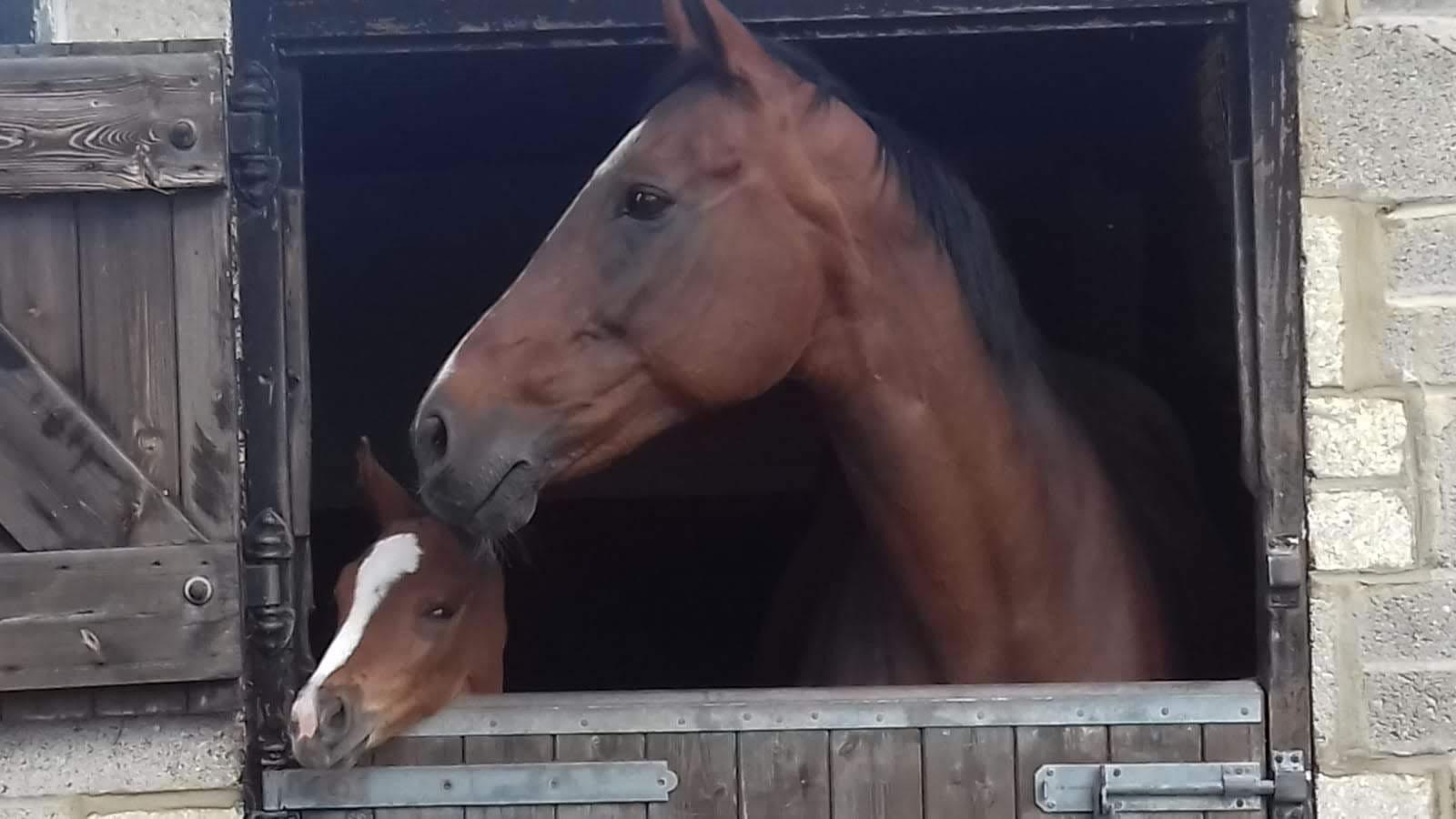 Mare & newborn foal looking over stable door
